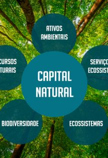 Post sobre o que é Capital Natural - CEBDS